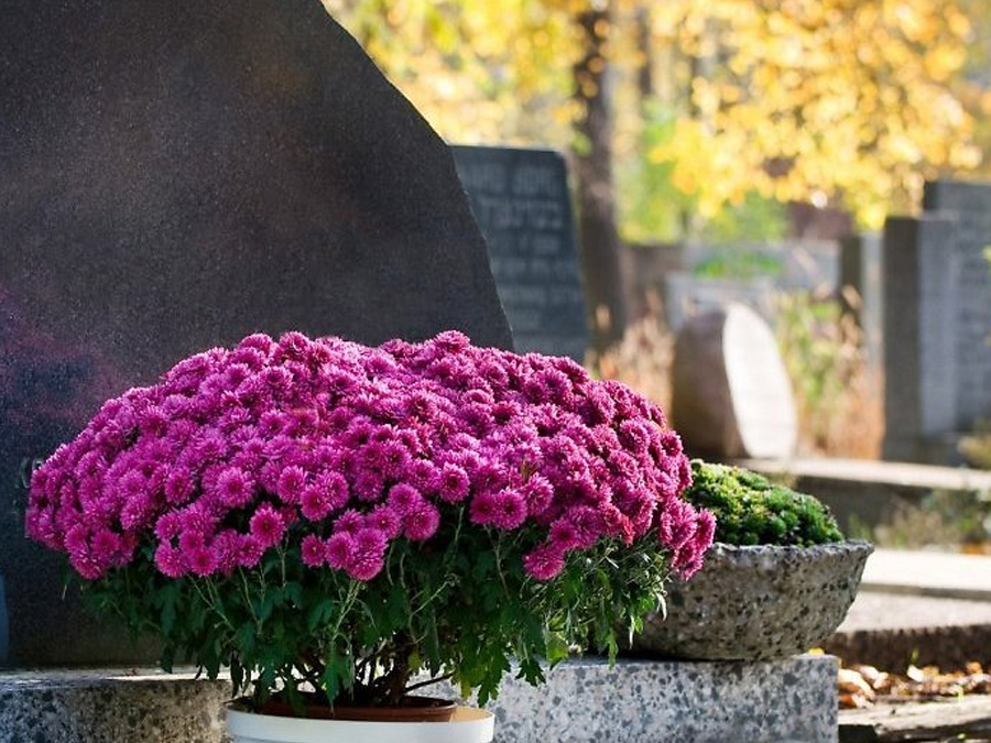 Zieleń Miejska Pogrzeby florystyka cmentarna
